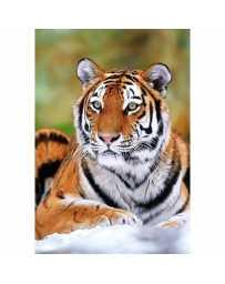Puzzle Tigre de Siberia