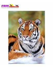 Puzzle Tigre de Siberia 500 Piezas.