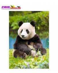 Puzzle Panda 500 Piezas
